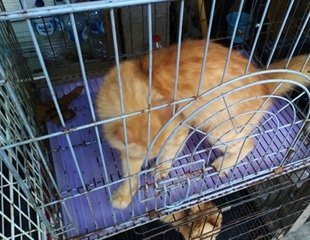 Gruesome cat and dog experiments by the USDA exposed