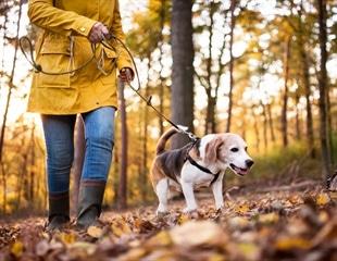 Dog walking increases risk of bone fractures in older adults
