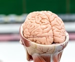What is the Neocortex?