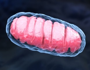 Removing damaged mitochondria may relieve chronic inflammatory conditions