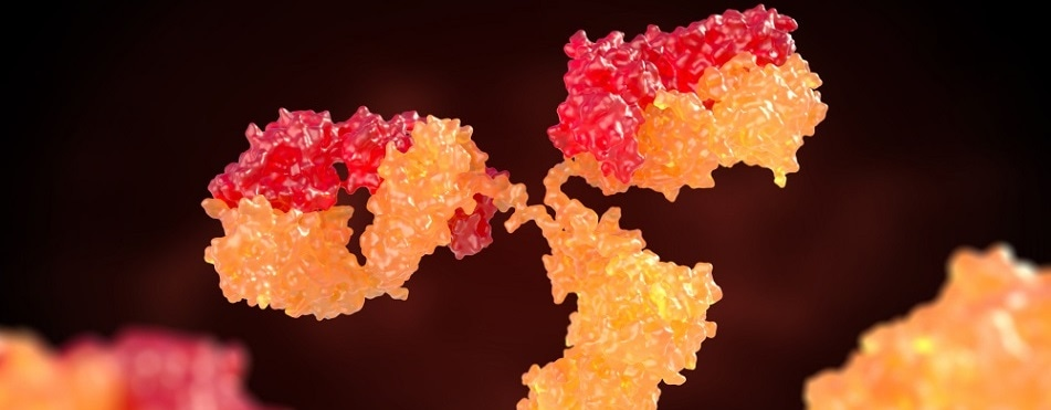 Ensuring 100% Accuracy in Antibody Protein Sequencing