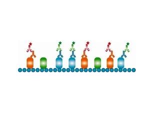 Bio-Rad launches new isotype-specific secondary antibodies