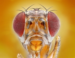 Are fruit fly 'avatars' the next step in personalized medicine?