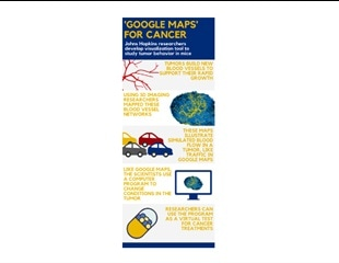 'Google Maps' for cancer: Image-based model accurately represents blood traffic inside tumors
