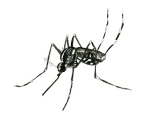 Egg yolk precursor protein plays key role in regulating mosquitos' attraction to humans