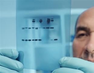 Roscovitine enhances nuclear enrichment of traditionally cytoplasmic signaling molecules