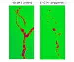 An Introduction to IR Nanochemical Mapping