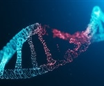 Researchers uncover new way in which the aging process is linked to DNA damage