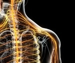 Common drug for nerve pain could help restore upper limb function after spinal cord injury