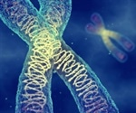 Breakthrough chromosome imaging could aid in development of new treatments