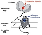 An Introduction to Metabotropic Glutamate Receptors