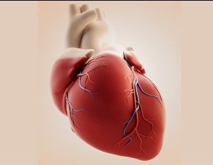 Defective immune signals could underlie some types of fatal heart disease