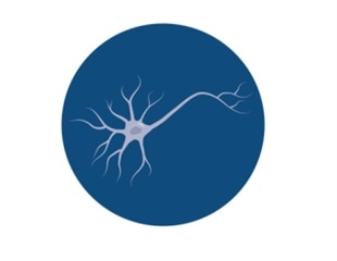 Neural Stem Cells for Frontotemperal Dementia and Alzheimer's Disease