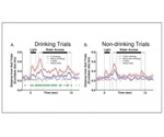 Neural activity is blunted in rats with family history of alcohol abuse