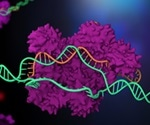 New gene-editing protocol allows perfect mutation-effect matching