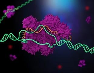 New gene-editing protocol allows perfect mutation-effect matching