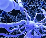 Schwann cells capable of generating protective myelin over nerves finds research