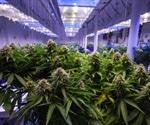 Marijuana isn't a great choice for glaucoma treatment, says expert