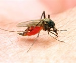 Mosquito surveillance in Madagascar reveals new insight into malaria transmission