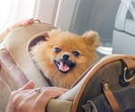 Use of emotional support animals growing in popularity