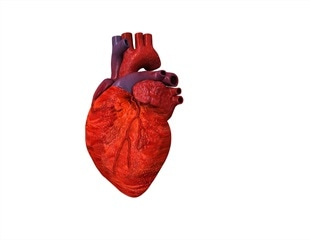 Scientists 3D print full-scale functioning heart components for the first time