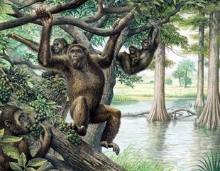 A new view of human evolution via Hungary