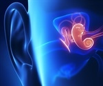 The ear's sensitivity to sound is controlled by outer hair cells