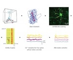 Performing Accurate Dendrite Imaging Using Two-Photon Lasers