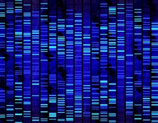 Some genetic sequencing misses out large parts of the genome