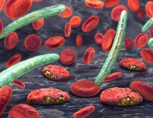 The International Consortium Claims Medical Breakthrough in Malaria Research