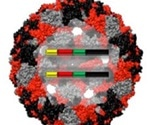 Biomimetic virus-like particles for safer positive controls in SARS-CoV-2 detection