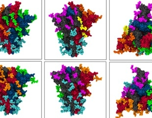 Advanced model reveals dynamic motions of SARS-COV-2 spike-shielding glycans