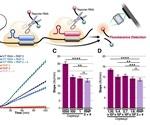 Rapid detection of SARS-CoV-2 with portable CRISPR-based mobile phone diagnostic test