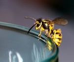 Scientists engineer powerful novel anti-microbial molecules from wasp venom