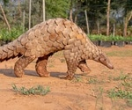 More evidence Pangolin not intermediary in transmission of SARS-CoV-2 to humans