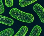 SARS-CoV-2 hijacks mitochondria