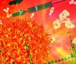 Human coronaviruses cause processing body loss