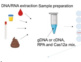 A digital CRISPR-based method for quick detection and absolute quantification of SARS-CoV-2