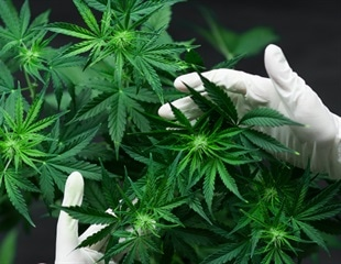 Novel cannabis plant extracts could protect against COVID-19