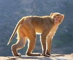Researchers compare rhesus and cynomolgus macaques for SARS-CoV-2 vaccine trials