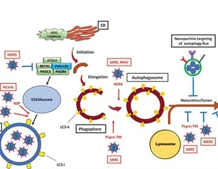 New insight into role of autophagy in controlling SARS-CoV-2 infection