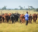 2018 anthrax outbreak in Uganda tied to infected cow meat, study finds