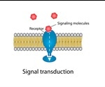 Signal Transduction: An Overview