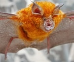 Scientists detect a sarbecovirus phylogenetically related to SARS-CoV-2 from bats in Japan
