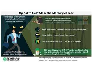 Researchers find the potential of opioid drug to help mask fear memory