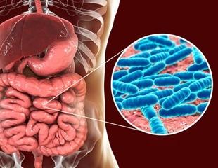 Gut bacteria may predict risk of pulmonary hypertension
