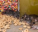 Pheromone darcin changes brains of female mice