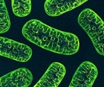 What is Mitochondrial Fractionation?