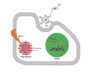 Single-drug therapy can attack several cellular targets using different modes of action