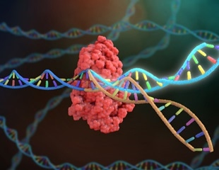 Finding new treatments for muscular dystrophy with CRISPR-Cas9